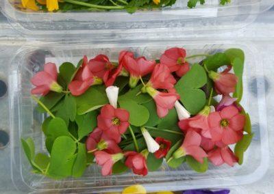 Les Sourciers - fleurs hydroponie