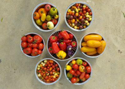 Les Sourciers - tomate poivron hydroponique 2