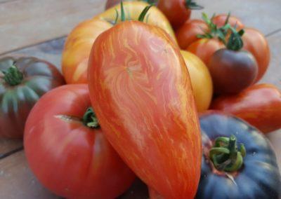 Les Sourciers - tomates