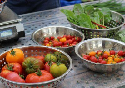 Les Sourciers - tomate hydroponique 6