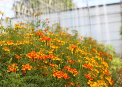 Les Sourciers - Fleur orange