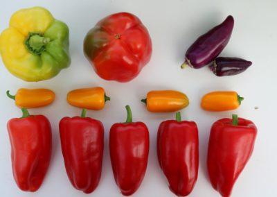 Les Sourciers - légumes hydroponie
