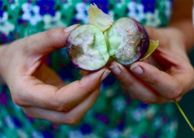 Les fruits et l'hydroponie - Les Sourciers