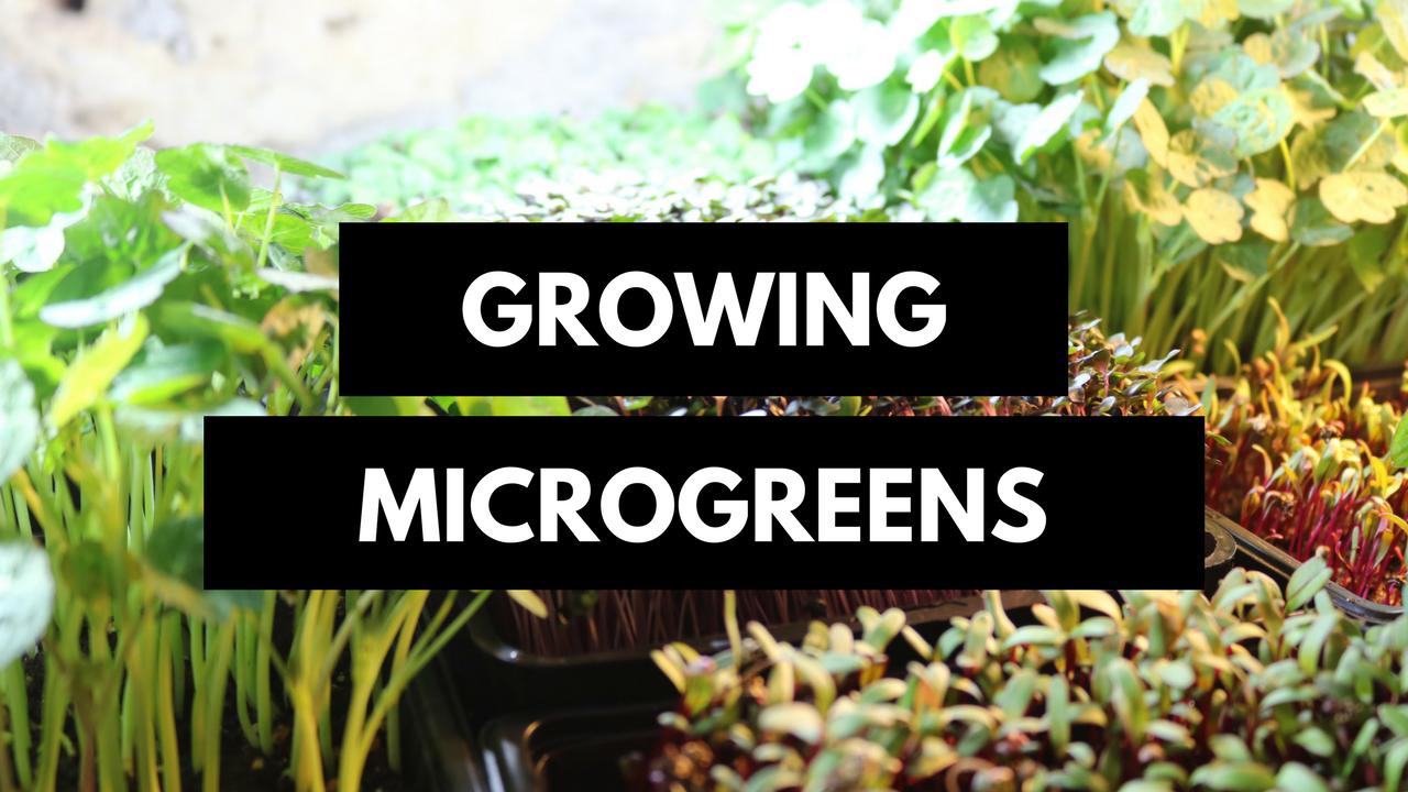 formation microgreen les sourciers